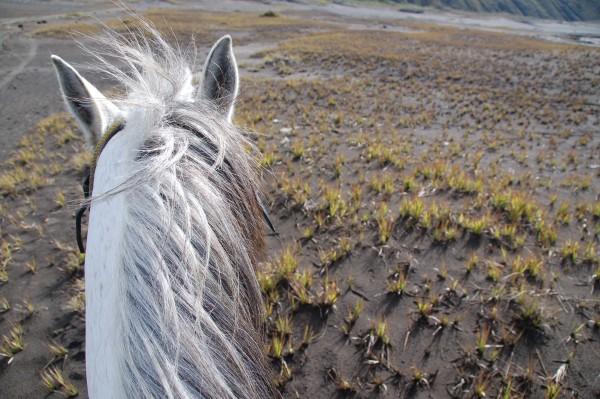 Horse Hair -